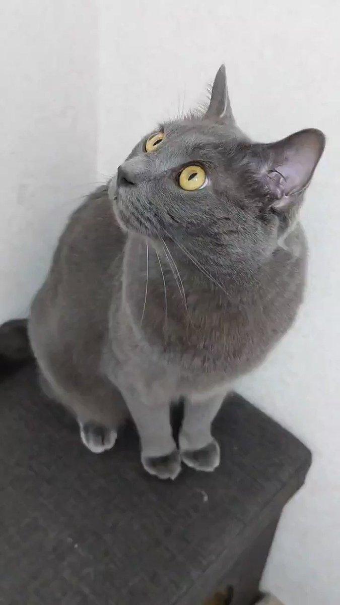 帰宅したらポコやんが部屋に来てくれましたよ〜✌️嬉しいね😽#猫 #猫のいる幸せ #猫好き