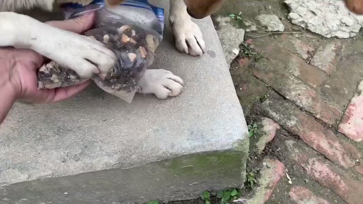 【自分もお腹ペコペコなのに子犬のオレオ🐶に先にご飯を食べさせるママ犬マリア🐕💕】『先にいっぱい食べなさい❣️』
