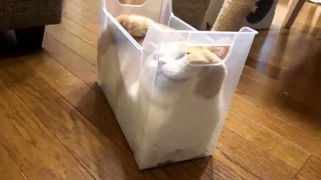 """From @jirosan77: """"スリムなプラケースでくつろぐ猫"""" #catsofinstagram"""