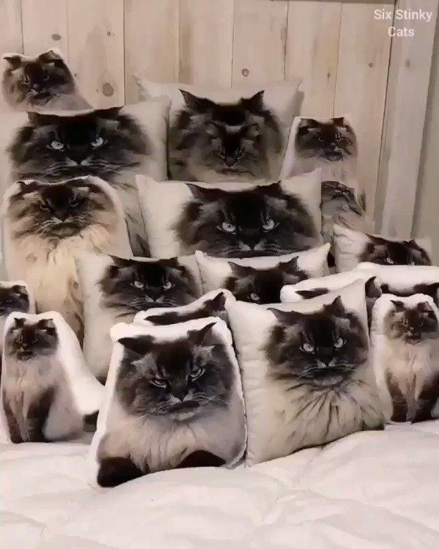 本物の猫は見つかるかな? https://t.co/5YnXsOA7zv