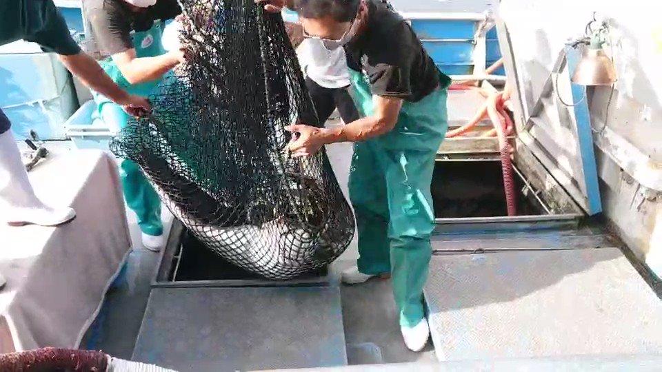 わたぽん激レアの魚ゲットだよ❗南知多ビーチランドで観られるようになるかも❗️