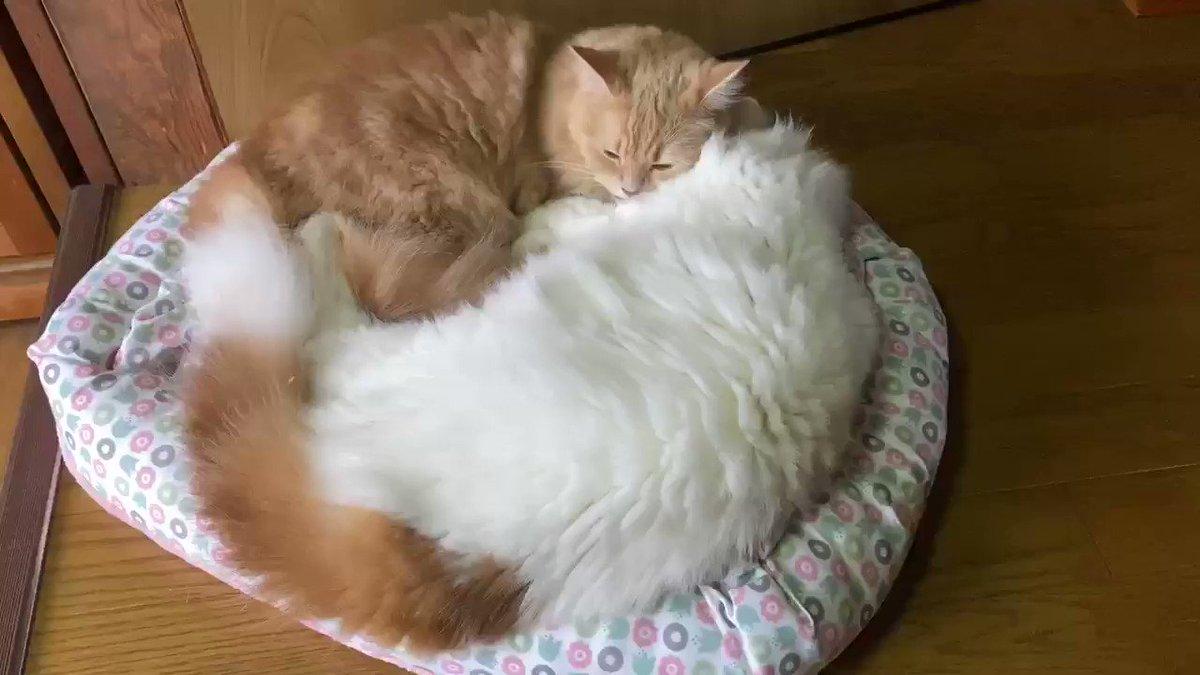 そのうち、一つになりそうです🤣#猫