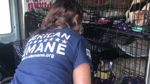 Image for the Tweet beginning: This week, the American Humane
