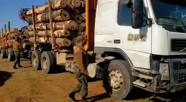 🔴Carabineros de la Prefectura COP Los Álamos detuvieron a un sujeto que conducía un camión que fue visto momentos antes cargando madera sustraída en un predio forestal de la comuna de Contulmo. El sujeto fue detenido por el delito de Hurto de Madera. https://t.co/culvWNTJ0y