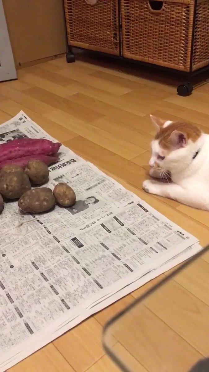 【悲報】お芋屋の店員、閉店後にとんでもないことをする#猫好きさんと繋がりたい #猫