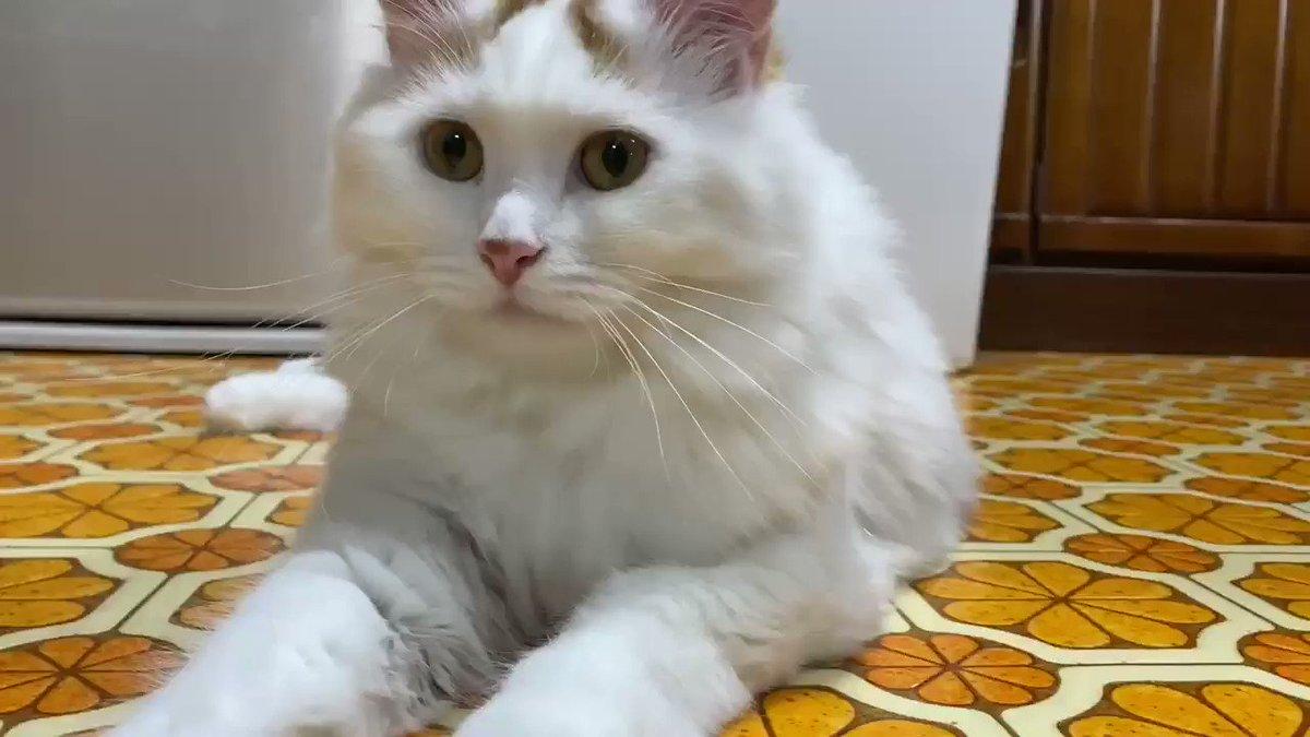おはようニャン😽#猫