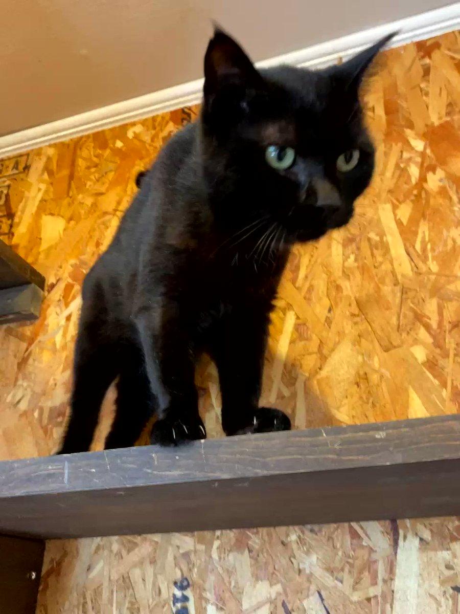 Image for the Tweet beginning: 📷:2020/09/22 〖 タカシちゃん 〗女の子だけどこのお名前☺️ご覧の通りとても人懐っこくて人を見つけると鳴いて寄ってきてくれるかわいい子です! #保護猫