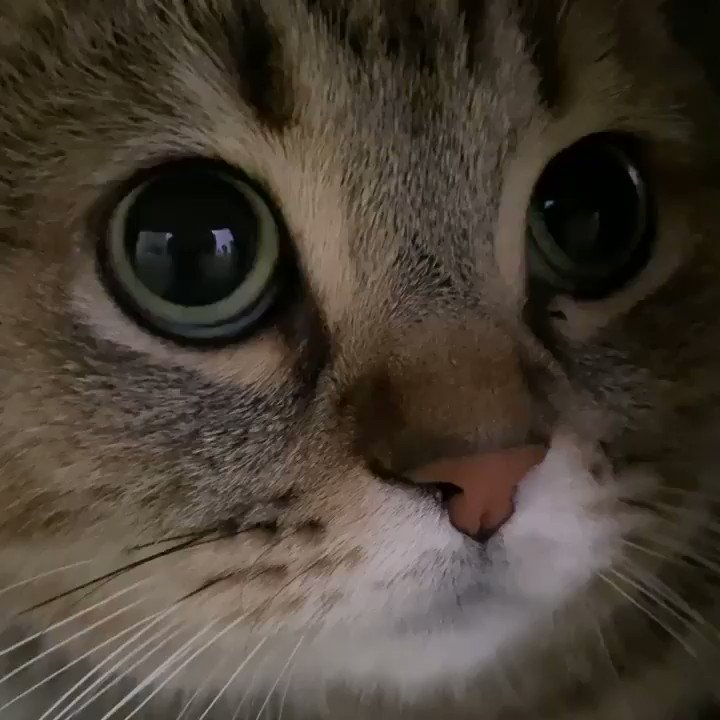 "From @kote218: ""『どアップにゃ😺』"" #catsofinstagram"