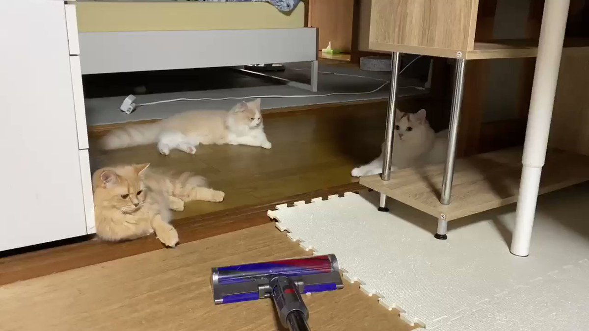実はもう少し近づいたら、飛んで逃げます🤣#猫