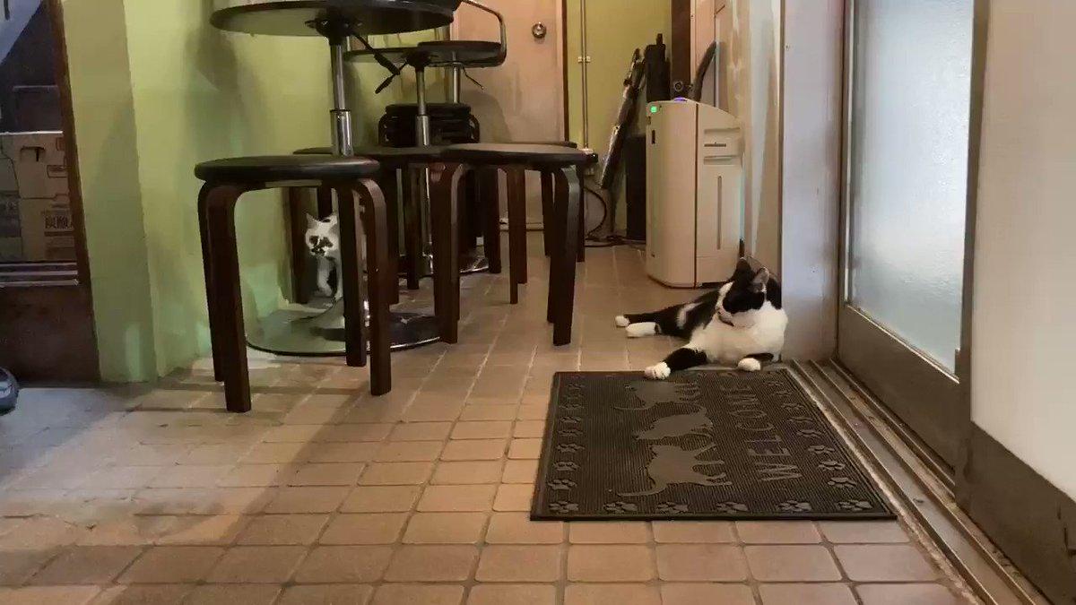 いつも急にひっくり返るミ#熱海 #BAR #猫 #Cat