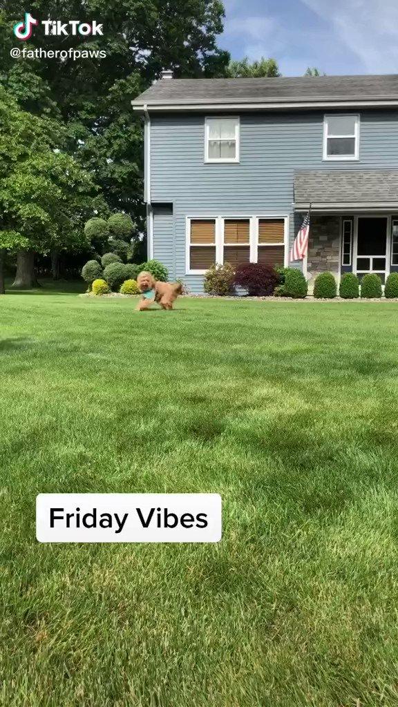 #FridayVibes 🐶🤣