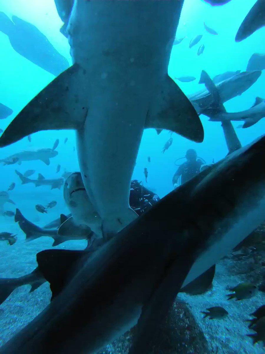 おはようございます🦈今日は沢山のサメから!笑
