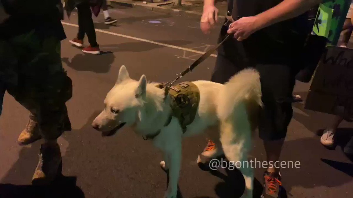 Not sure if the curfew applies to canines, but they're out here marching too #Louisville #LouisvilleProtests #BreonnaTaylor https://t.co/AgyWHjeLU4