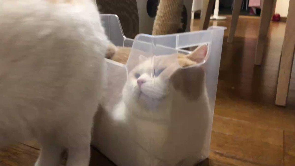 液体化する猫