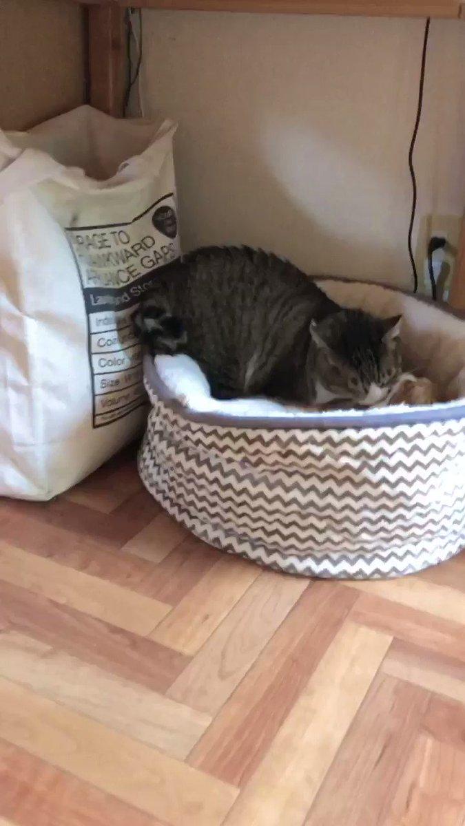 半年前に外からお迎えしたボス猫と先住お兄ちゃん猫のなんとも睦まじい姿。お互い成猫でオス同士なのにこんなに仲良くなれるものなのか。外では喧嘩もしてたのか傷があちこちあったけど、うちではたまにじゃれる程度で穏やかそのもの。今、満たされているのかな?下僕はちゃんと仕事できてますか?