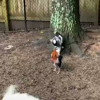 It's a good time to #DailyGoat https://t.co/tre6eyPnIt