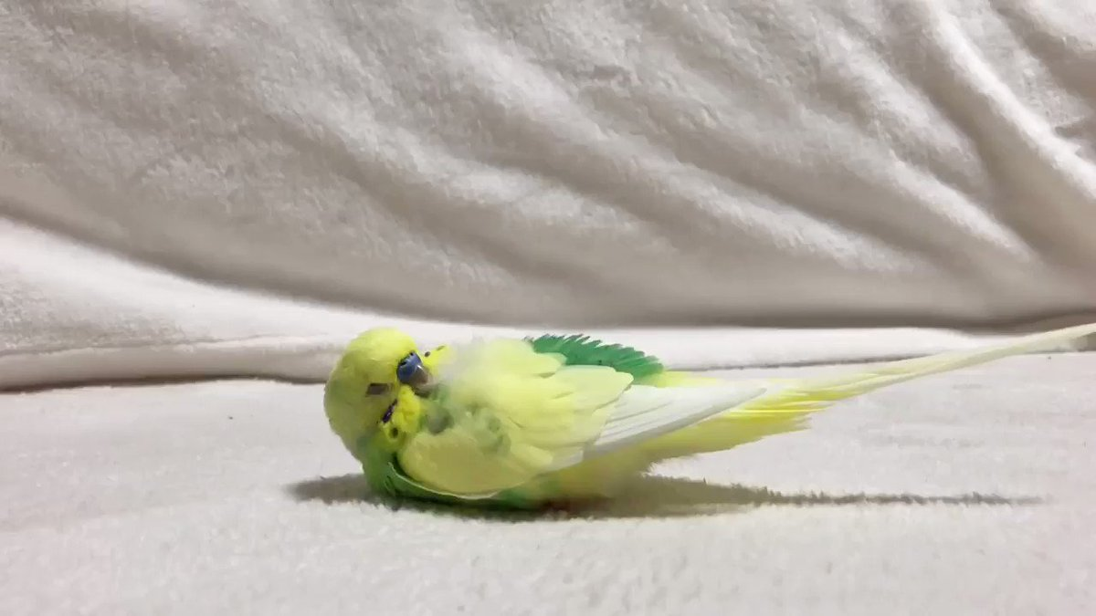 …💤…!? やだっ!!!寝ちゃった!!