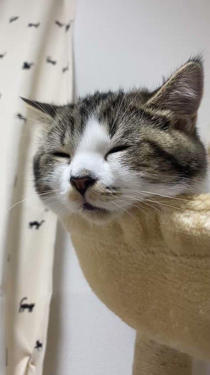 ネコチャンの寝息が良すぎて、はやくこれになりたい