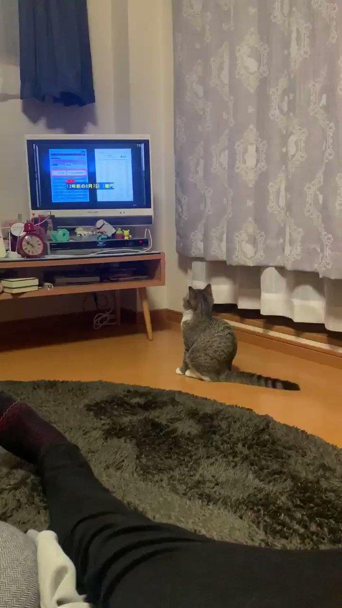 #半沢直樹 うちの猫も夢中になって見てた😆❤️