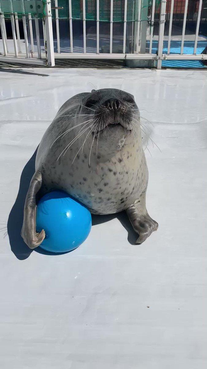ぼくとボールで遊んでくれるひとー?🥺✋🏻