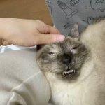 飼い主さんも思わず吹き出しちゃう?!心地良さのあまりに表情が凄いことになっちゃってる猫!