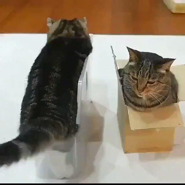 猫さんは二つのタイプに分かれます