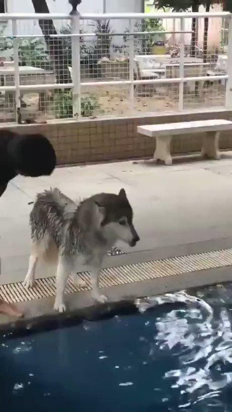 不敢下水的大狗 YK9o4eeAKpV_tyjP