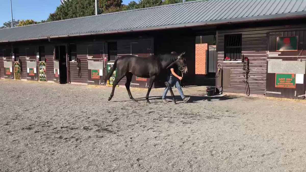 Lot 343 @Goffs1866 Orby is an Oasis Dream (@JuddmonteFarms) filly out of an own sister to Puissance De Lune & Queen Power. She is consigned by Roundhill Stud (@TimDonworth94).