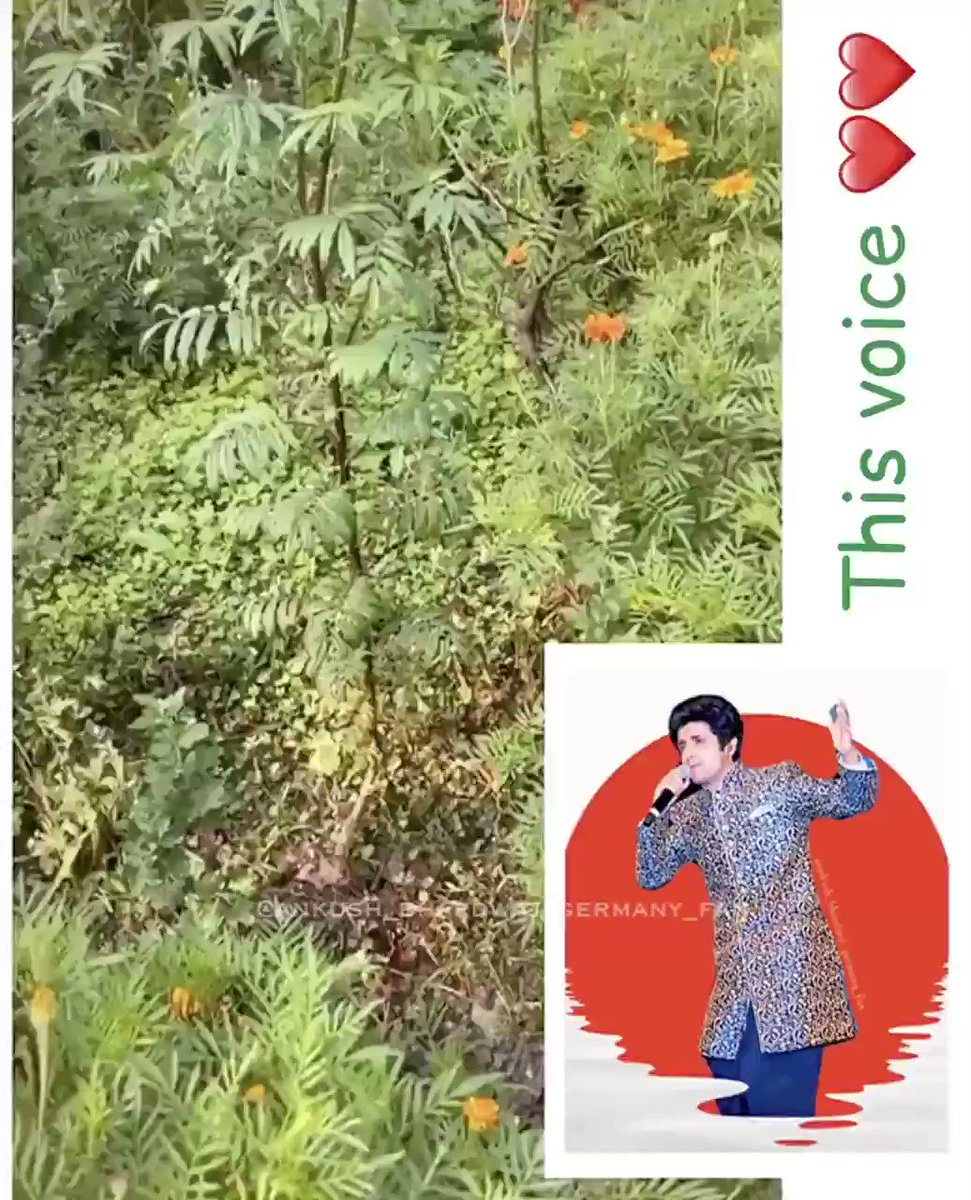 ❤️💚@ANKUSH_00007 Ur #voice is superbly #satisfying #peaceful #sweet #hearttouching #calm #emotional 💚❤️  🎤🎵 ur voice suits everything perfectly 🎶👌🏻 Thank u so much for sharing this clip a few days back 🤗 🙏🏻 God bless u 😇 #music #mountains #himachal #singer @Ankush_Fanclub https://t.co/K4CLtrU20Q