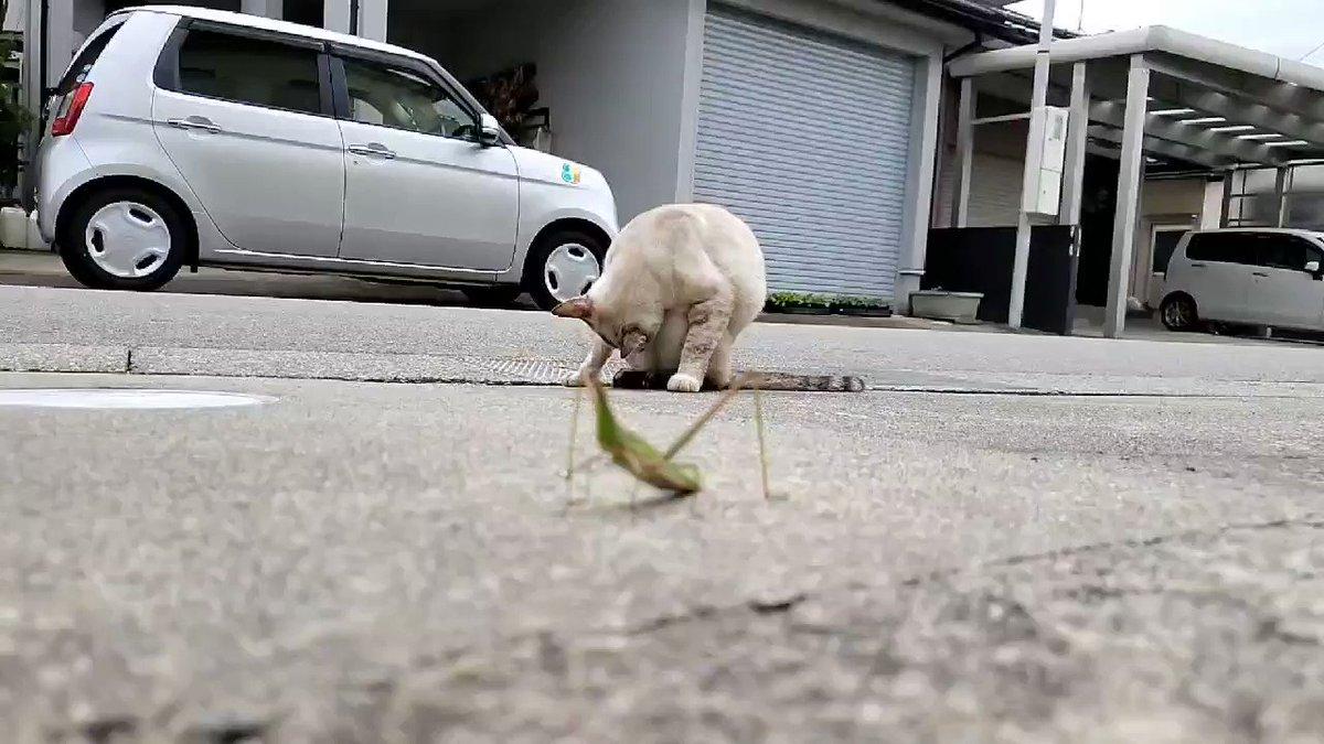 螳螂:嚇了我大跳 Odpgi-q4Gls-li6N