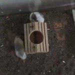 一見ネズミバグに見えるこの行動。実は重要なサインかもしれない!