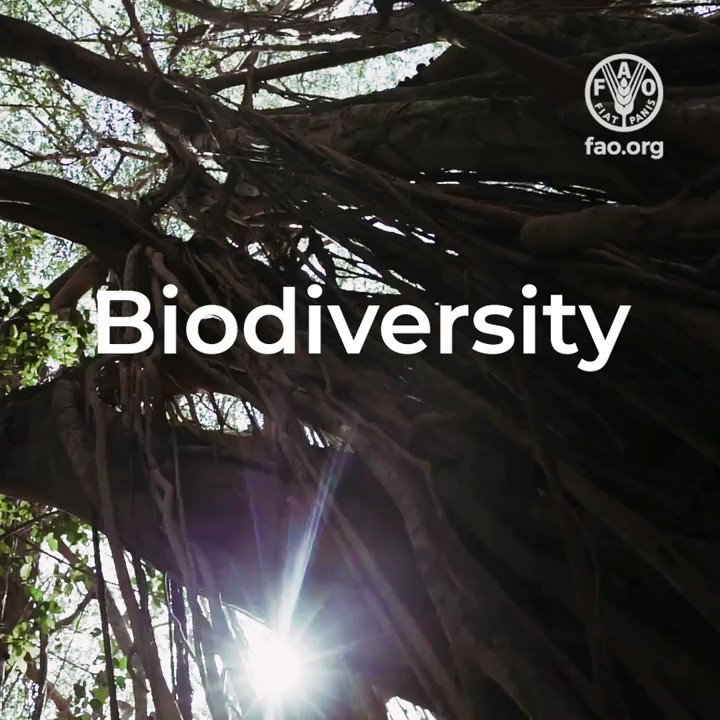 It is the thread that connects us all.  We wouldn't have food if it didn't exist.  Our life & wellbeing depends on it.   What are we talking about?   #BIODIVERSITY   #Biodiversity2020