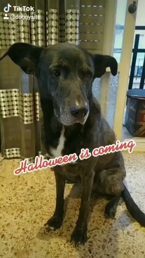 Podéis verlo completo en #TikTok     #Halloween #Halloween2020 #halloweencostume #BuenosDias #Diadeldocente #QuedateEnCasa #YaLlegoPoderoso #dogsoftwitter #cosplay #BuenasNochesATodos #viral #humor #perros #loveit