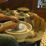 猫の窯元に最後の微調整をして貰い完成!絶妙な加減でベテランの腕を披露?