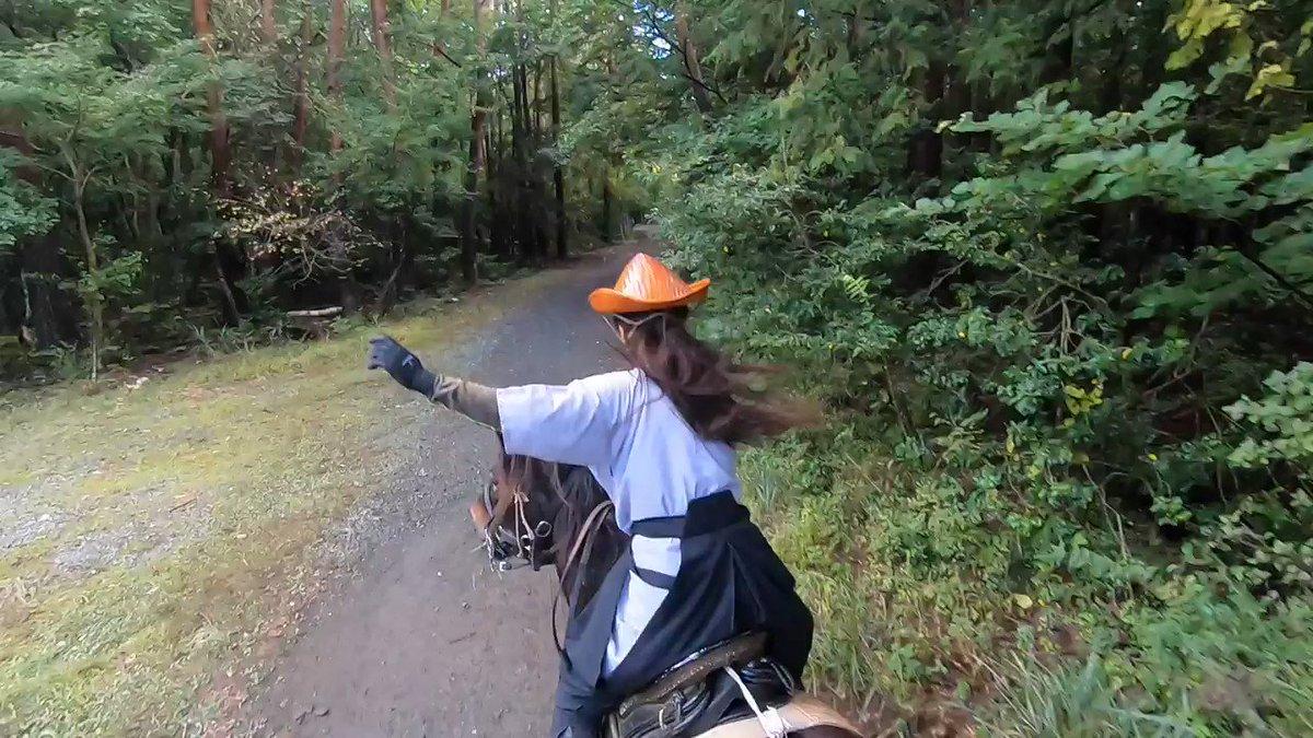 和種馬で和式馬装、袴をはいて襲歩 紅葉台木曽馬牧場の外乗コースを駈け、途中、ちょっと道から外れて山に入ってみたりしている動画  馬は先頭から凛、撮影者が乗っている二番目が章姫、三番目の白馬は翼。オリエンテーリングの子供達が道にいたので、注意しながら見通しの良いところだけを走りました