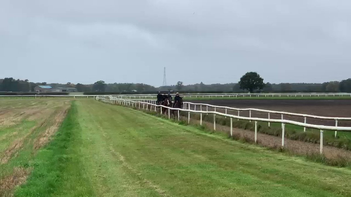 Lovely to see Group winner Penitent leading some of the yearlings on their first day out on the gallops!!