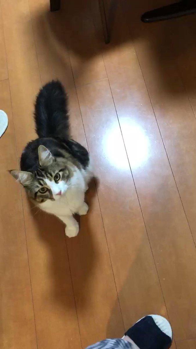 Topics tagged under 可愛動物 on 紀由屋分享坊 LQvXtXSiZup-PviC