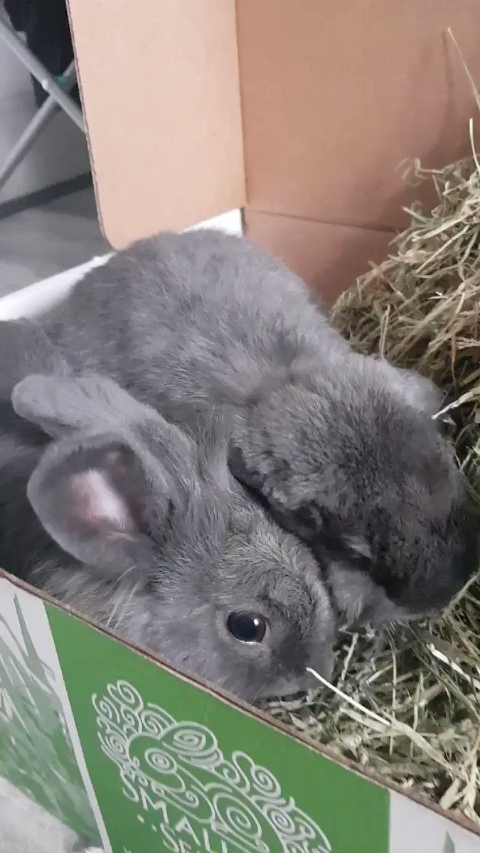 .@SmallPetSelect pure happiness! Your hay boxes are like Christmas in this house 😊🐰❤ #bunny #rabbits