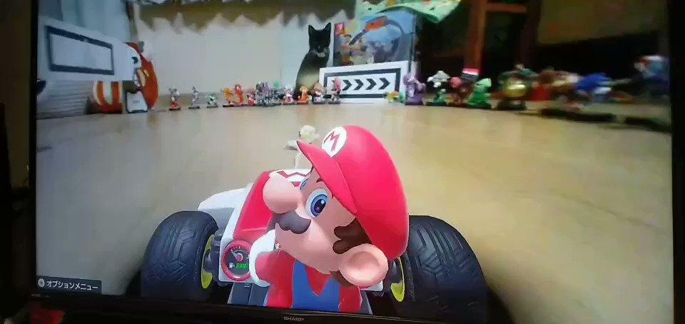 #マリオカートライブホームサーキット  カートを追いかける猫をバックカメラで見たいとの声が多かったので、バック走に挑戦!