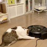 動くルンバに驚く猫の映像!リアクションが華麗で機敏すぎるw