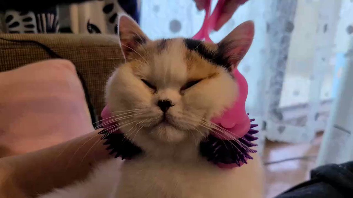小顔マッサージを受ける猫