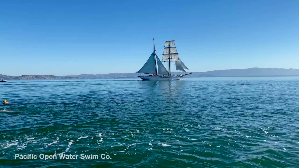 Image for the Tweet beginning: The Matthew Turner near Raccoon
