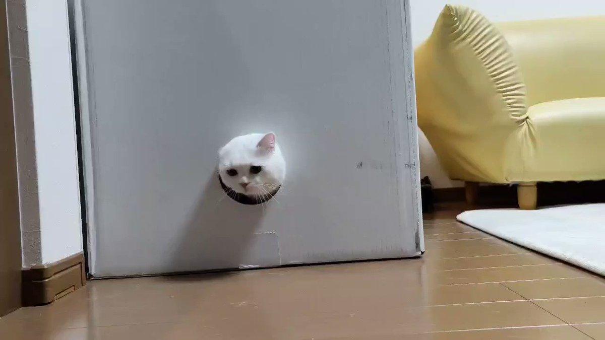 猫を無限に生成する永久機関