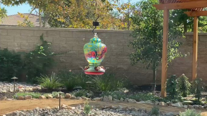 So the hummingbirds dislike this food, but the bees are really going after it... apparently they're SO