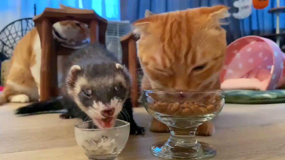 くぅお兄たん、二度寝したからぷくお兄たんと😋#猫