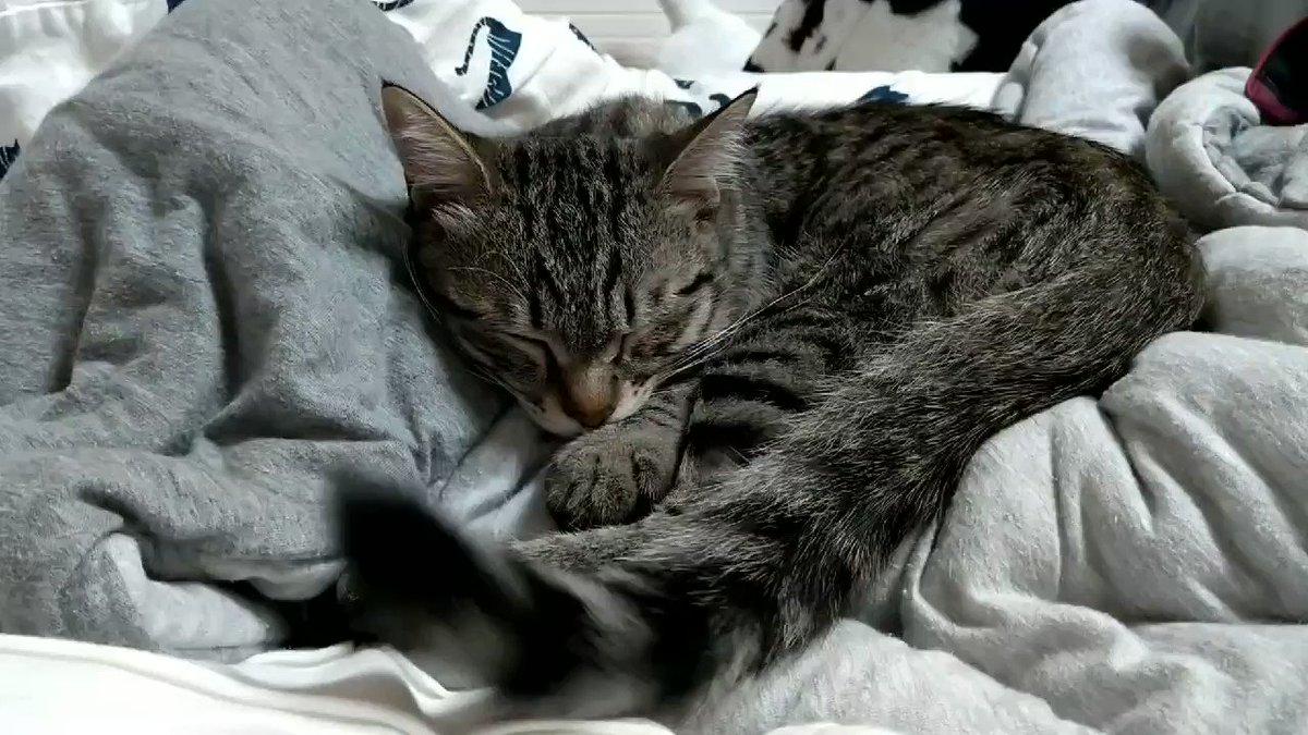 おやすみ〜