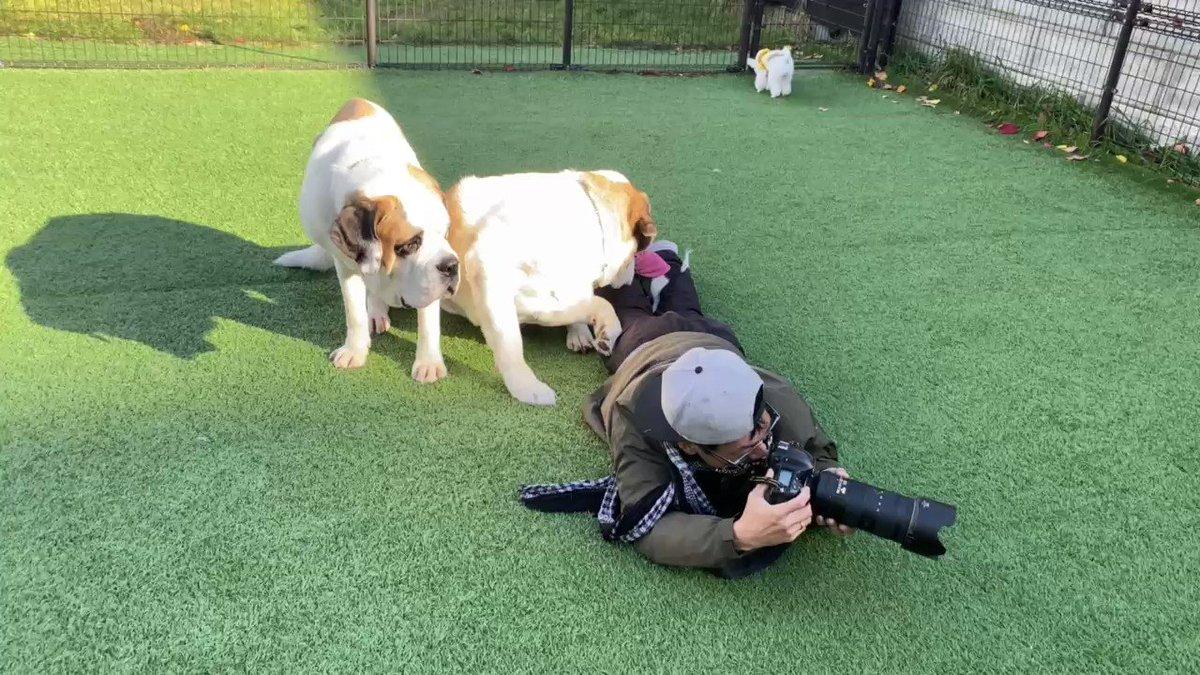 イッヌのプロカメラマン・湯山さんのお仕事風景。このように撮影が非常に困難な状況でも、少しもひるまずにイッヌたちの感動的な瞬間を切り取り続けます。何というプロ根性。さすがです。(顔出しOK確認済)