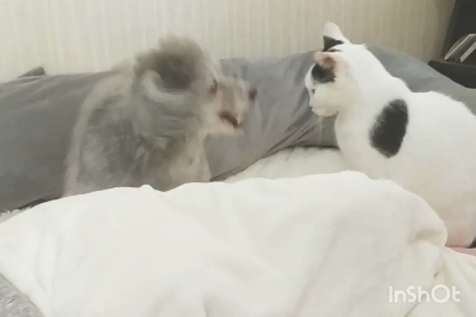 一度の攻撃で数発を打ち込む犬vs一発ですべてを終わらせる猫
