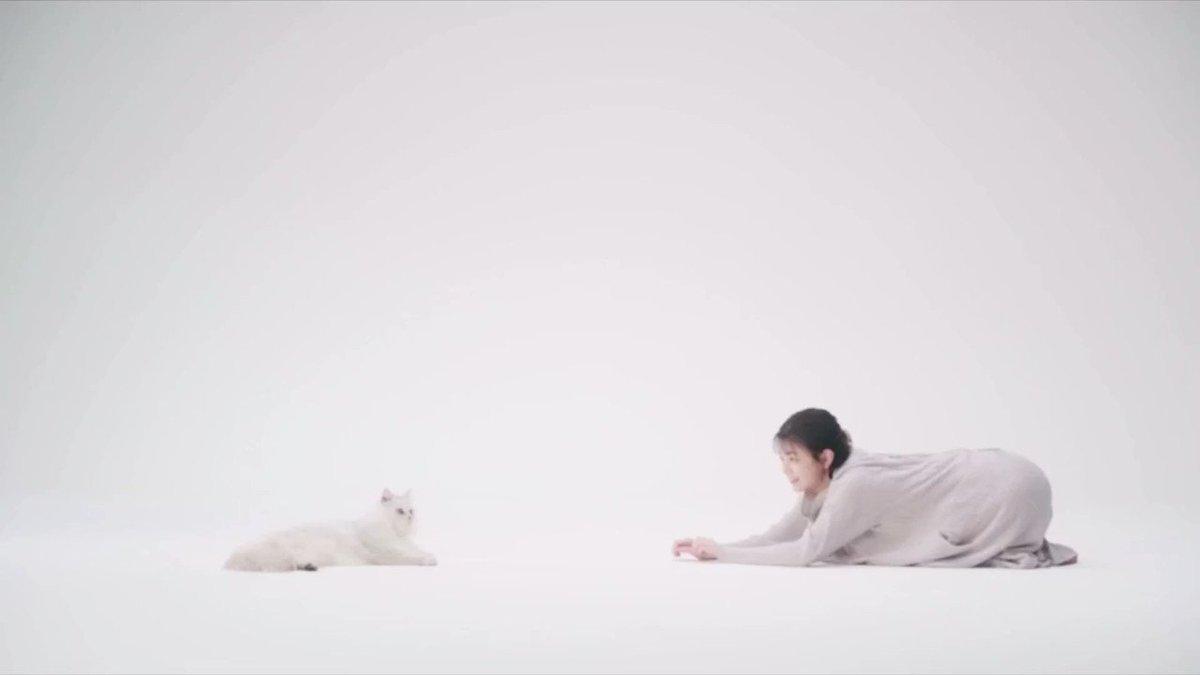 猫ちゃん 可愛すぎました¨̮#春日製紙工場株式会社#静岡 #CM