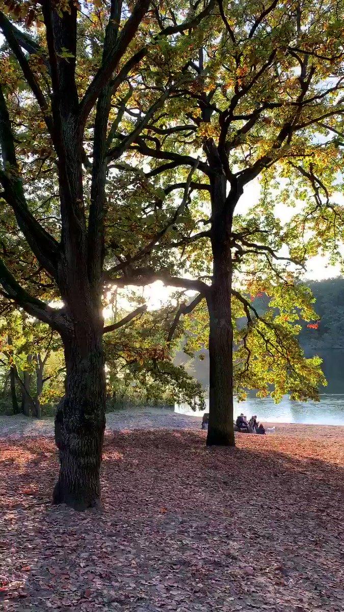 Image for the Tweet beginning: Ich liebe den Herbst einfach!